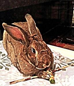 BunnyWithStick (c) Wendigogo 2016